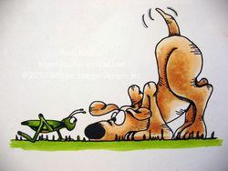 Aselagrasshopdog
