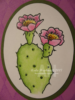 Cactuscloseupasela_2